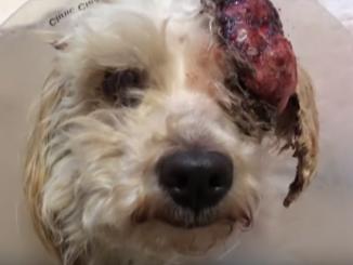 Cane sta per essere abbattuto: animalisti lo salvano