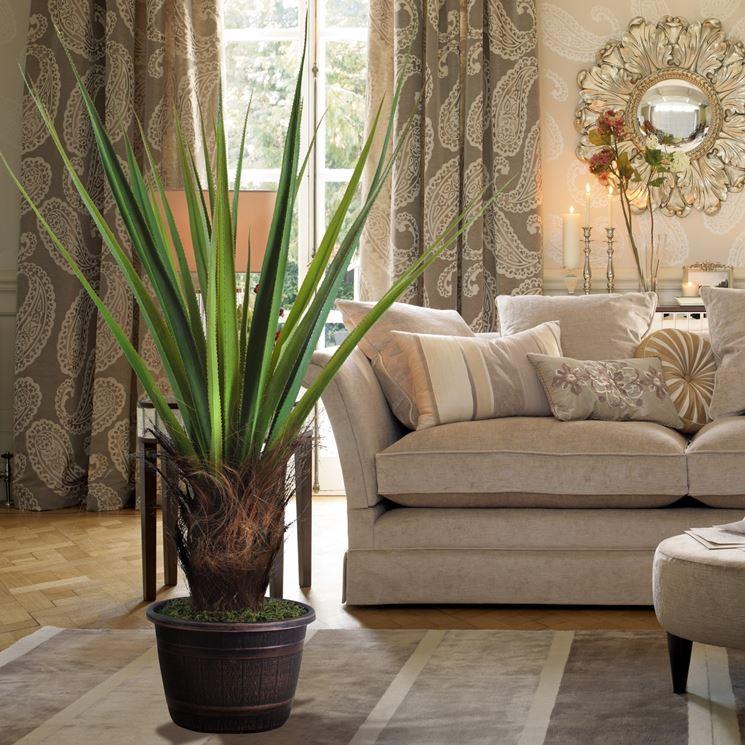 piante grasse da appartamento alte