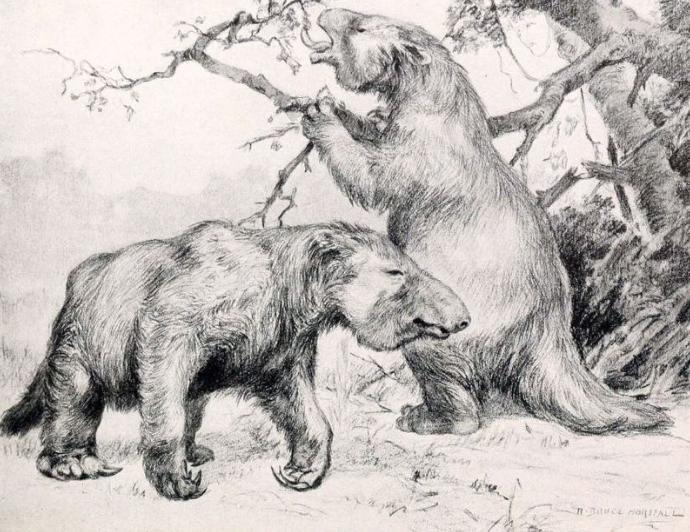 I bradipi giganti