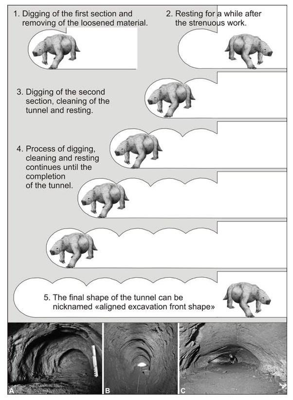 Evoluzione preistorica