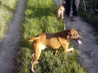 Cani smarriti in autostrada: salvati dalla polizia stradale