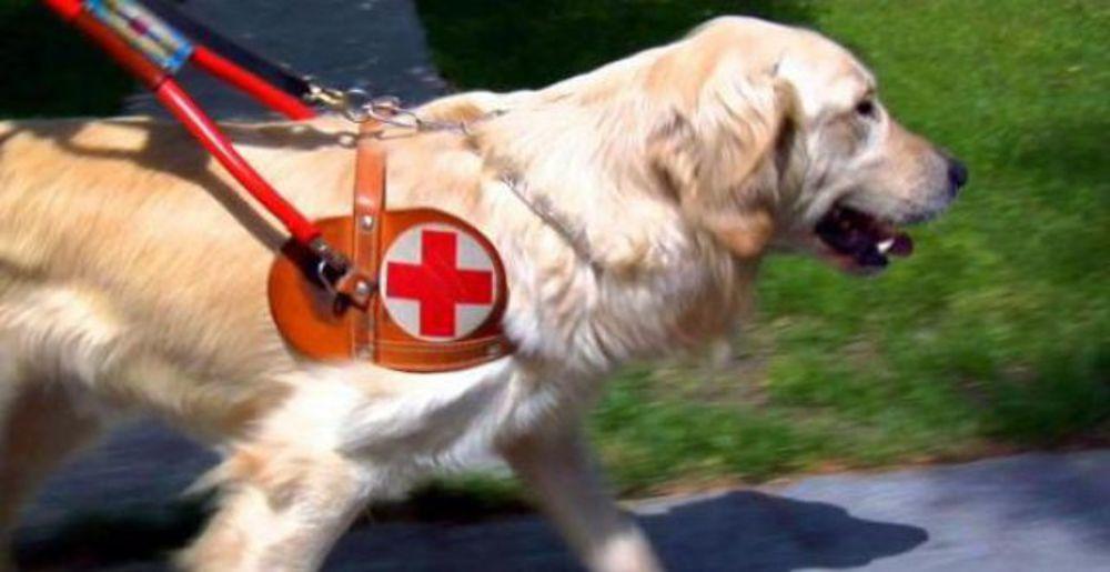 cane guida-2