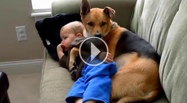 copertina-cane-bambino-fb