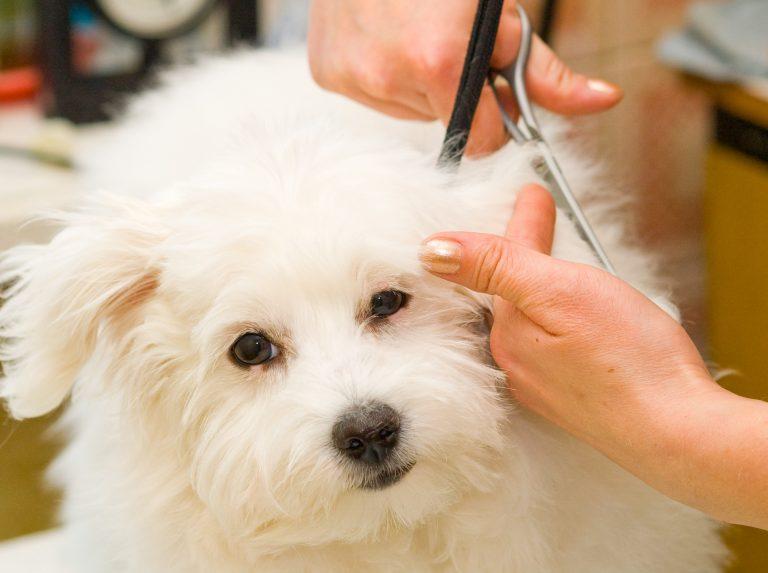 Kit toelettatura per cani: migliori marche