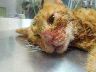 Gattina picchiata da un uomo crudele. Ecco la storia