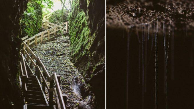 Nuova Zelanda: fotografo scopre creature strane in grotta