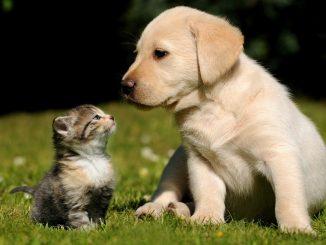cistite del gatto e del cane: cura omeopatica