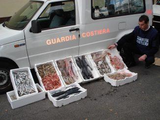 Calabria: sequestrato carico di pesce ittico non tracciato, sanzione di 1500 euro