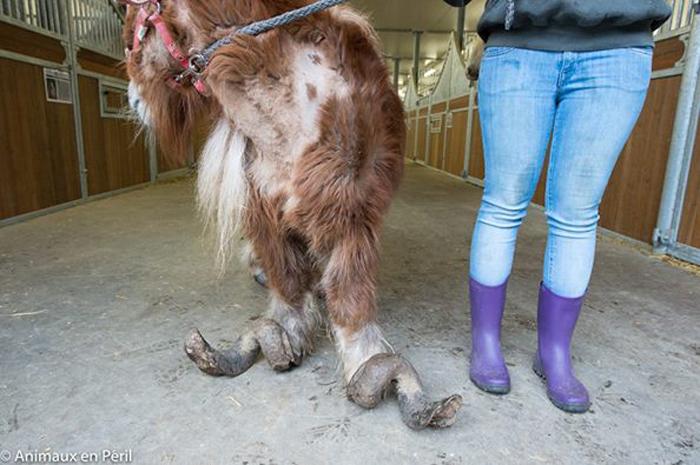 Pony malnutrito: gli animalisti si indignano e insorgono