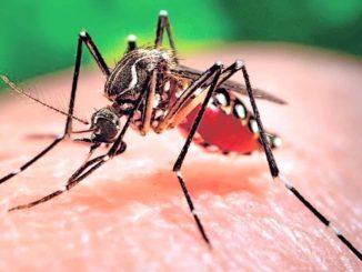 Brasile emergenza Zika: il governo la dichiara conlusa