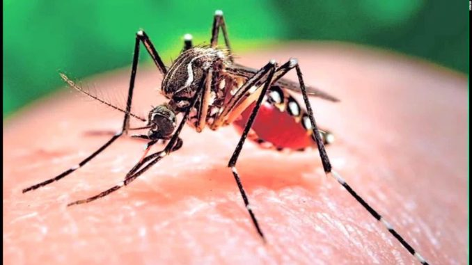 Brasile emergenza Zika: il governo la dichiara conclusa