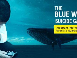 blue-whale-sg