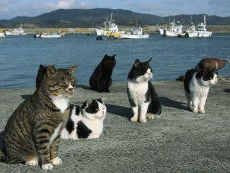 Gatti al porto