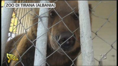 Nello zoo di Tirana