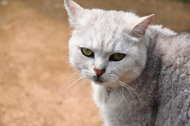 Integratore per gatti: prodotto innovativo per il suo benessere