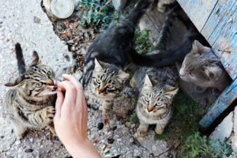 Paradiso dei gattofili