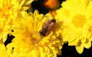 pianti e fiori api