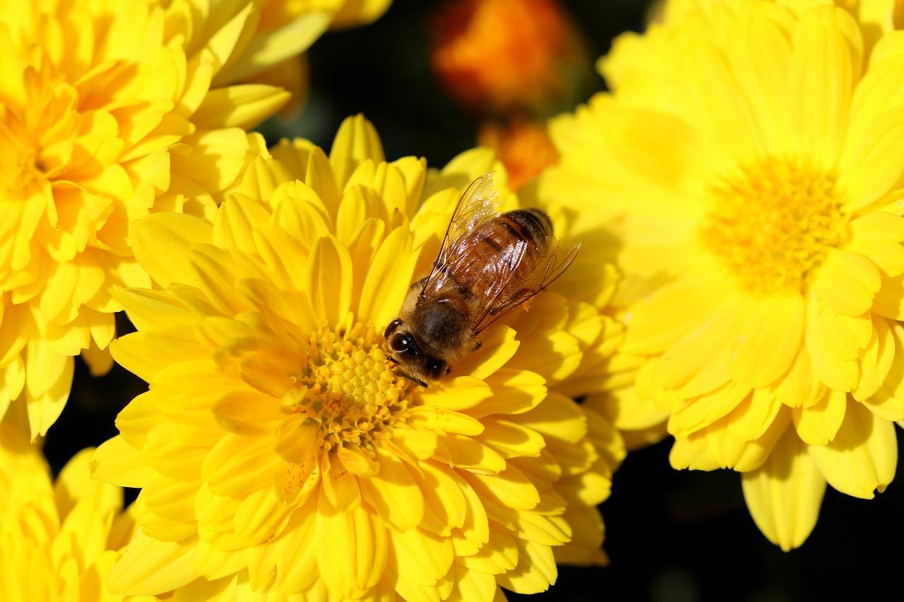 Repellente Naturale Per Vespe l'utilizzo di piante e fiori per tenere lontane api e vespe