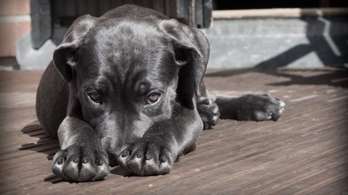 Perde il lavoro e sgozza il suo cane per sfogarsi