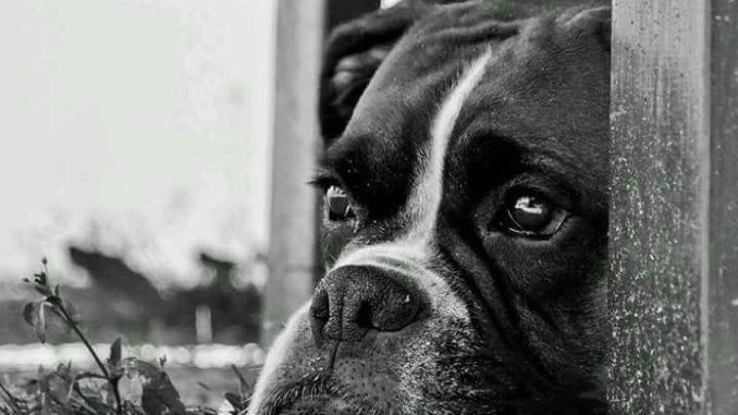 Massacra il cane a martellate tagliandogli la gola per il troppo stress
