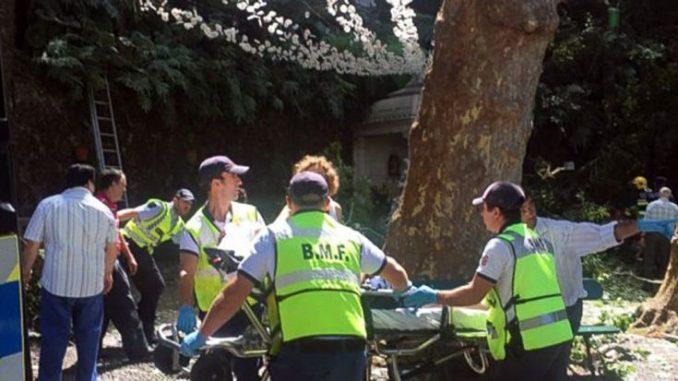 Portogallo, albero cade sulla folla di fedeli, è strage: 11 morti