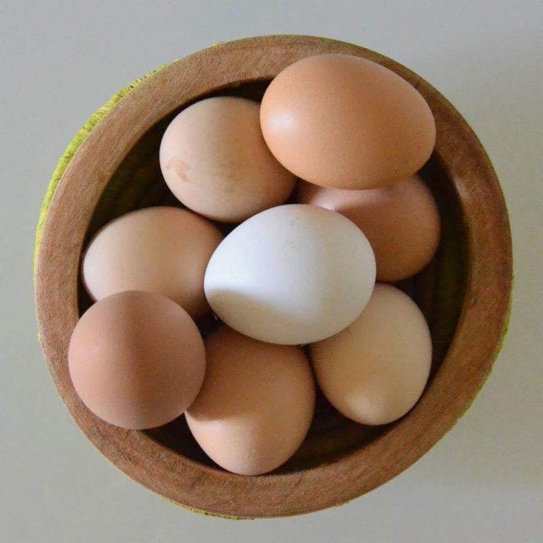 Uova da controllare