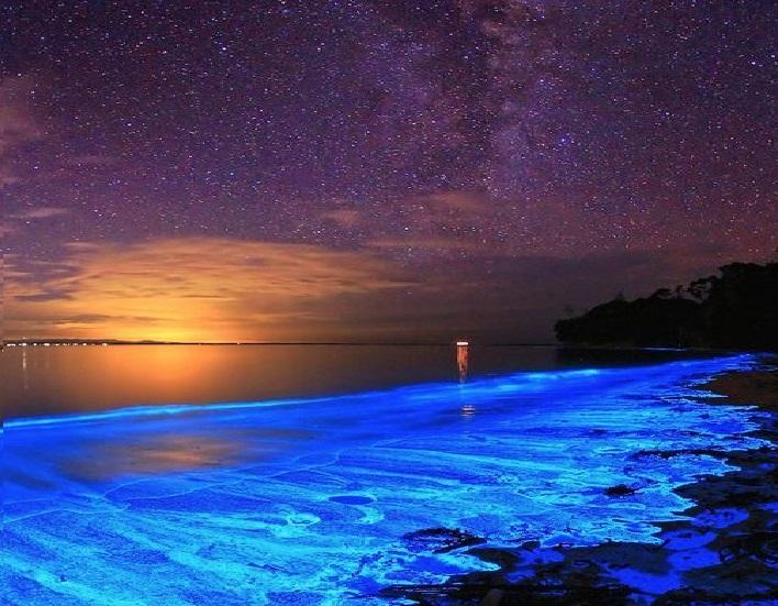 alga blu