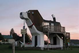 big hotel dog