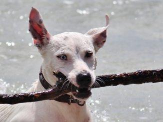 Spiagge dog-friendly