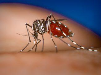 Chikungunya Roma