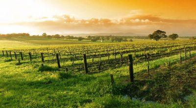 Altra valle famosa per il vino