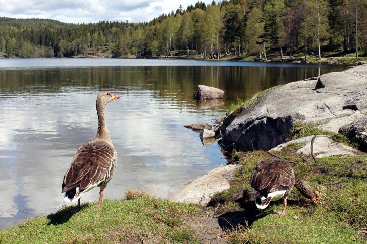 Lago Sognsvann, Oslo