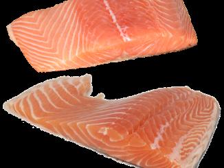 salmone da allevamento