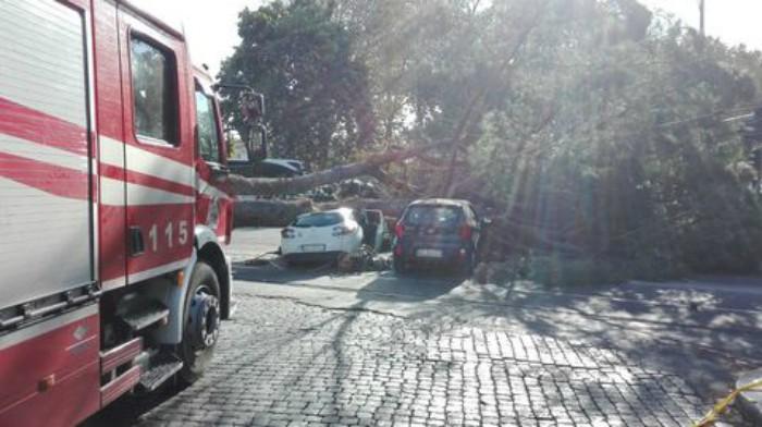 Crolla un albero in centro a Roma: auto distrutte e persone coinvolte