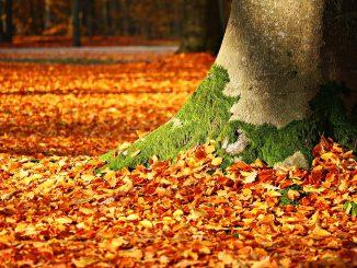 fall foliage 1913485 1280