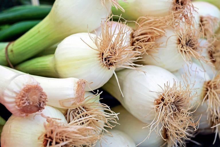 cucinare i cipollotti
