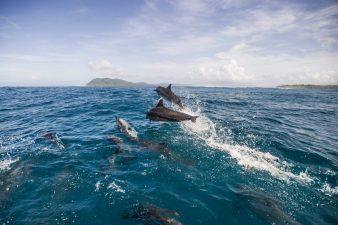 Solomon-Islands-6
