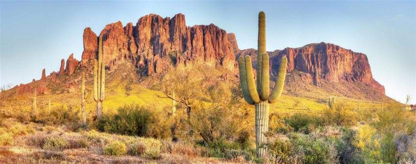 Sonoran Desert, Saguaros and Brittlebush catching day's last rays.