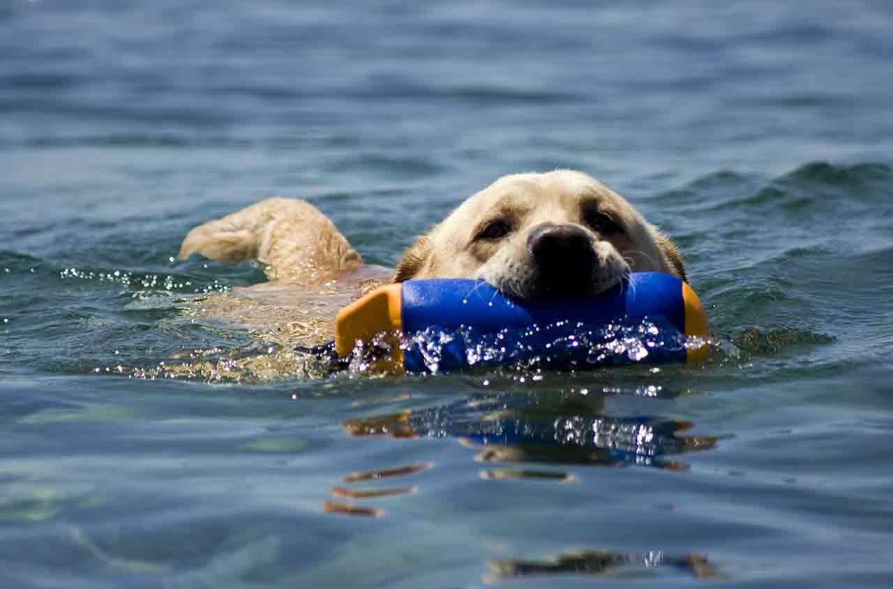 cani, salvataggio a san benedetto