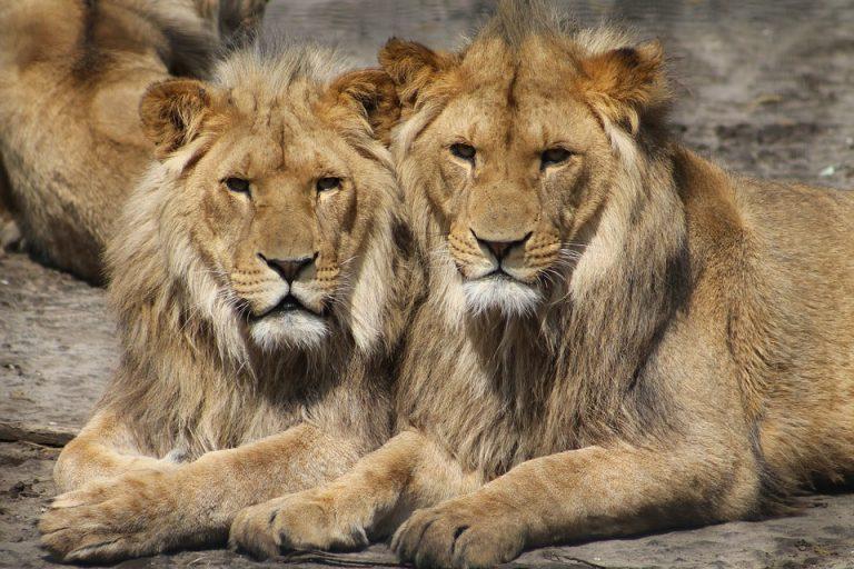 leoni gay