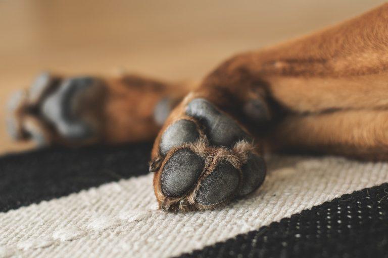 unghie del cane