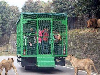 L'insolito zoo cinese