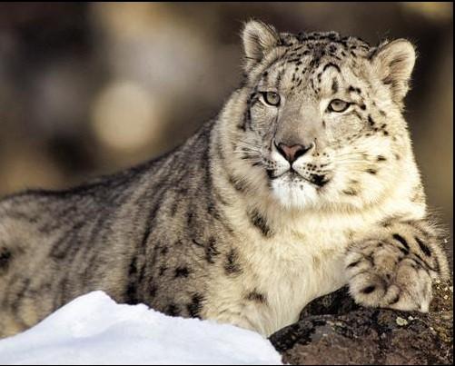 Animale non più in via d'estinzione