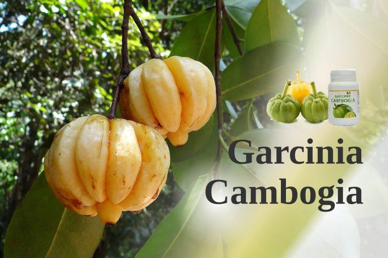 GARCINIA CAMBOGIA.