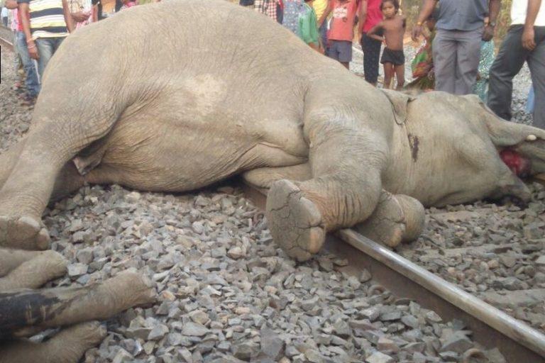 Elefanti morti