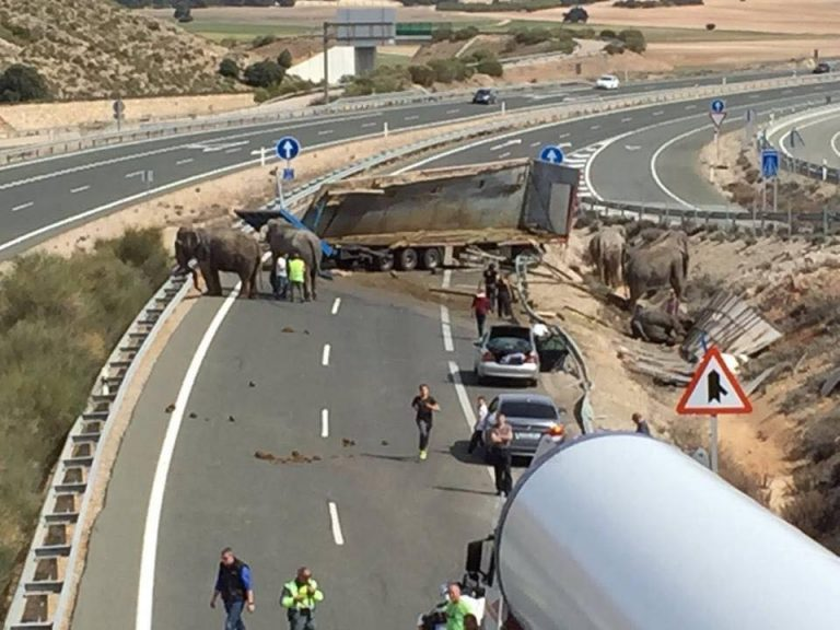 Spagna. incidente sull'autostrada con il camion da circo: muore un elefante