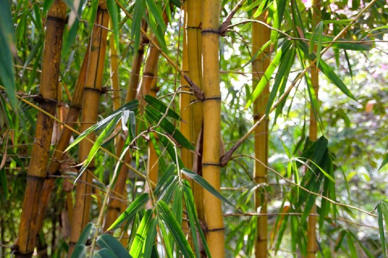 bambu 768x512