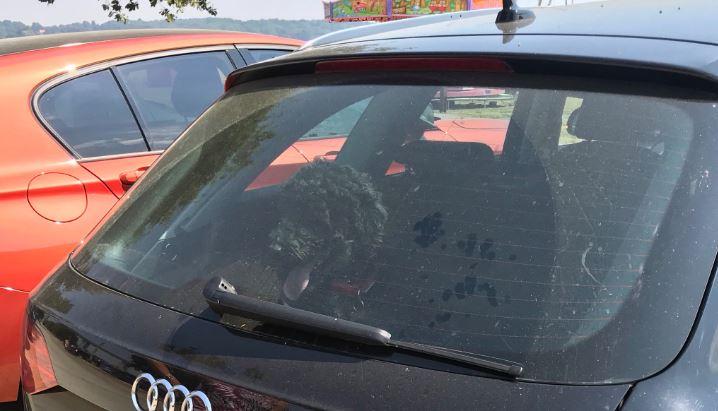 Cane abbandonato in auto: morto per asfissia