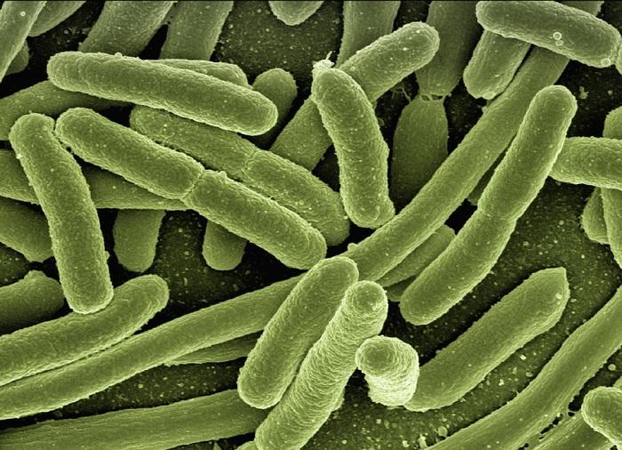 batterio