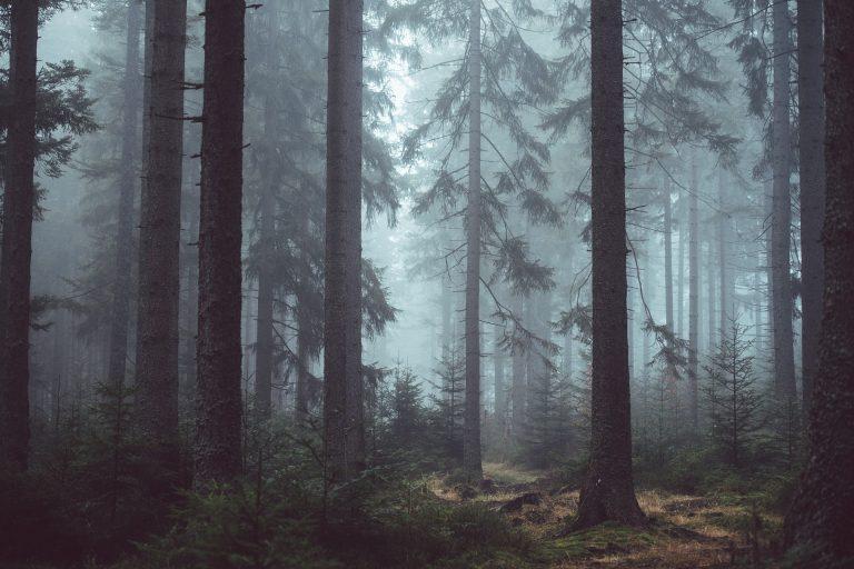 Boy scout ritrovati nei boschi di Pordenone